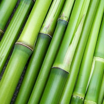Bambusfaser
